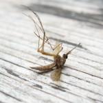 komarci gbl