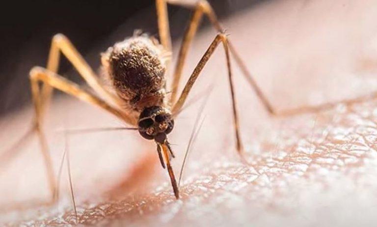 KORISNI SAVJETI Šta komarce privlači, a šta ih odbija?